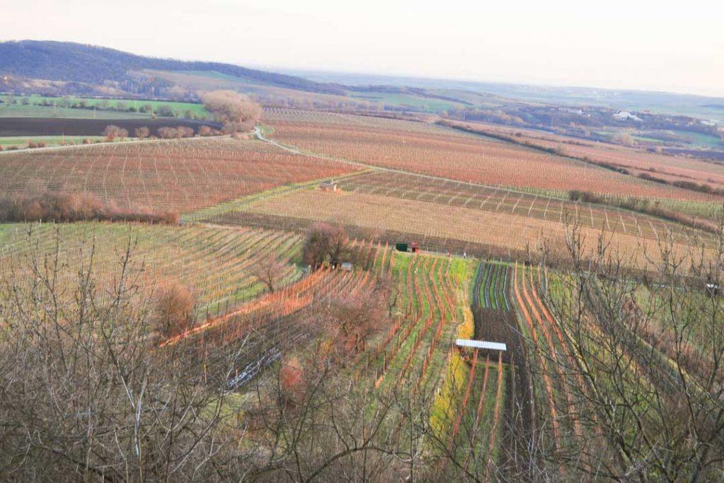 autumn vineyard landscape in the mikulov south moravia czech republic , Moravian countryside , wine production culture touristic destination blue cloudy sky